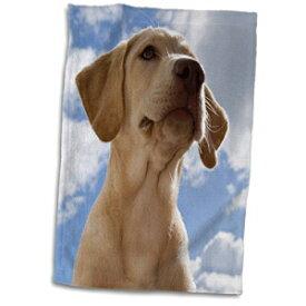 3D Rose Labrador Retriever Puppy Dog-Na02 Rbr0018-R