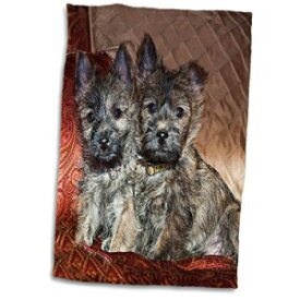 3D Rose Two Cairn Terrier Puppy Dogs-Na02 Zmu0174-
