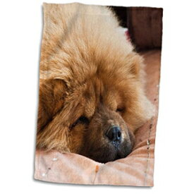 3D Rose Chow Puppy Dog On A Tan Bedspread-Na02 Z