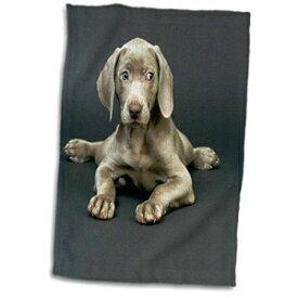 3D Rose Weimaraner Puppy Towel, 15 x 22