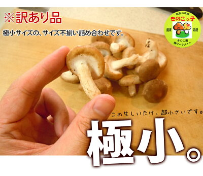 しいたけ送料無料『満天☆青空レストラン』で絶賛の和歌山県産シイタケ稀少きのこ訳あり生椎茸
