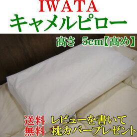 IWATAキャメルピロー高さ5cm【高め】