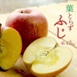 【送料無料】青森県から直送! 葉とらずふじ りんご 一箱 4.5kg (14〜20個)
