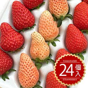 【紅 白いちご  送料無料】【 残留農薬0 無農薬】紅白 いちご セット[24粒入り]イチゴ/苺/ホワイトベリー 章姫 その他高級いちごの2色/いちご/白イチゴ/白苺/ギフト/贈答