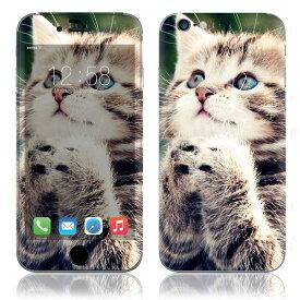 【お取寄せ】 iPhone6/6Plus/6s/6sPlus スキンシール DecalSkin [AN06/かわいい子猫] デコシール デコシート 背面シール iPhone 6 6Plus 6s 6sPlus iPhone6 iPhone6Plus iPhone6s iPhone6sPlus 送料無料
