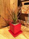 【送料無料】ドラセナ レインボー 鉢植え 高さ20cm程度 観葉植物 レッド スクエア 受け皿付き【土植え 真実の木 赤 陶器 デスク 誕生日…