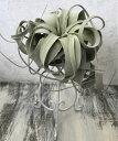 【送料無料】 エアープランツ キセログラフィカ ホワイト アイアン スタンド 観葉植物 【エアプランツ スパニッシュモス チランジア イ…