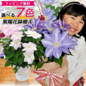 7色から選べる クレマチス 5号サイズ 鉢植え 母の日 プレゼント 特大ボリューム満点 送料無料 鉢花 母の日ギフトフラワー 花 鉢植え ギフト母の日 送料込 母の日 2021年