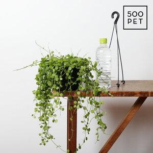 吊り下げディスキディア・ハートジュエリー(観葉植物おしゃれ人気小さいプラ吊り鉢)