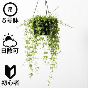 ディスキディア・ハートジュエリー(プラスチック吊り鉢・受皿なし)