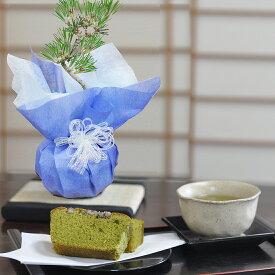 父の日 盆栽とお菓子のセット 松盆栽 本格四国黒松 京都の人気土産 抹茶ケーキ 選べる陶器の鉢 受け皿 or 敷物付き 趣味