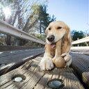 ちょうどいい噛み心地 ダイナソー ウッドバークボーン Lサイズ ペット クウォークス プラッツ 【犬/おもちゃ/歯…