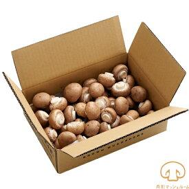 舟形マッシュルーム ブラウンマッシュルーム(業務用・家庭用)バラ 1kg【送料無料】キノコ 食品 マッシュルーム