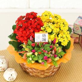 敬老の日 花 ギフト【花かご】季節の花かごギフト誕生日 プレゼント