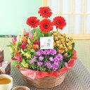 誕生日 花 ギフト 鉢植え 花 寄せ鉢 4種の花で作る季節の花かご 敬老の日