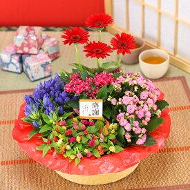 誕生日 花 ギフト 鉢植え 花 寄せ鉢 5種の花で作る季節の花かご 敬老の日