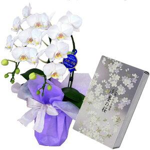 ミディ胡蝶蘭 2本立ち 白色 日本香堂のお線香 宇野千代 淡墨の桜 バラ詰