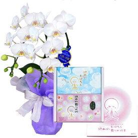ミディ胡蝶蘭 2本立ち 白色 丸叶むらた 沢山の有りが灯 香 沢山のおはなし ギフトセット Cセット ギフト 線香セット