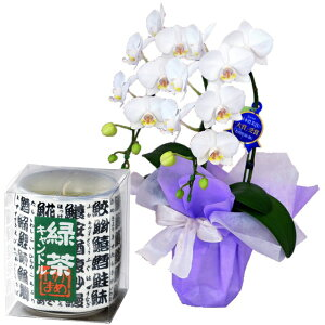 ミディ胡蝶蘭 2本立ち 白色 フランス製リボン カメヤマ 緑茶キャンドル ローソクセット