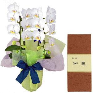 ミディ胡蝶蘭 2本立ち 白色 みのり苑 お香 風韻シリーズ 伽羅 短寸40本 セット ギフト