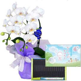 ミディ胡蝶蘭 2本立ち 白色 丸叶むらた ないしょのおはなし 16本入 専用ペン付き 文字の浮き出るお香 ギフト 線香セット