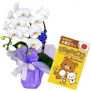 ミディ胡蝶蘭 2本立ち 白色 カメヤマのお線香 リラックマ線香 2つのおいしい香りのミニ寸線香 線香セット