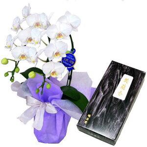 ミディ胡蝶蘭 お供え 花 線香セット 2本立 白色 鳩居堂 笑蘭香 ギフト