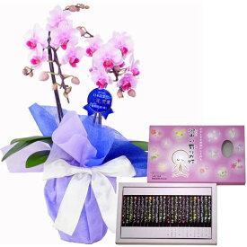 ミディ胡蝶蘭 2本立ち ピンク色 丸叶むらたのお線香 沢山の有りが灯 香 24本入 線香セット