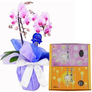 ミディ胡蝶蘭 2本立ち ピンク色 丸叶むらたのお線香 沢山の有りが灯ギフト Aセット