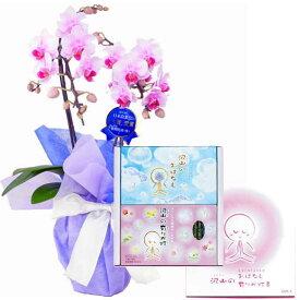 ミディ胡蝶蘭 2本立ち ピンク色 丸叶むらた 沢山の有りが灯 香 沢山のおはなし ギフトセット Cセット