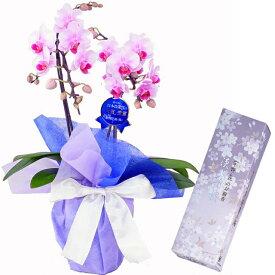 ミディ胡蝶蘭 2本立 ランラン ピンク 日本香堂 宇野千代 淡墨の桜 小バラ詰 線香セット