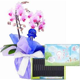 ミディ胡蝶蘭 2本立ち ピンク色 丸叶むらた ないしょのおはなし 16本入 専用ペン付き 文字の浮き出るお香 ギフト 線香セット