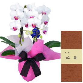 ミディ胡蝶蘭 2本立ち ユミ 赤リップ色 みのり苑 お香 風韻シリーズ 沈香 短寸15g セット ギフト