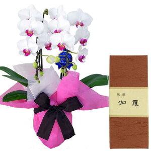 ミディ胡蝶蘭 2本立ち ユミ 赤リップ色 みのり苑 お香 風韻シリーズ 伽羅 短寸40本 セット ギフト