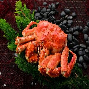 【ふるさと納税】[北海道根室産]たらば蟹姿2kg〜2.4kg前後×1尾 C-27012