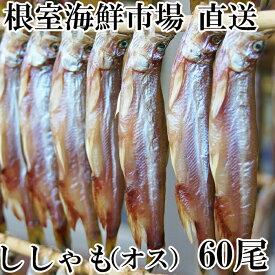 【ふるさと納税】根室海鮮市場<直送>ししゃも(オス)60尾 A-28035