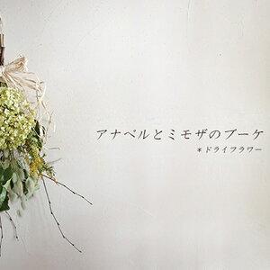 【ふるさと納税】アナベルとミモザのブーケ【富良野 花七曜 】 【植物・ブーケ・ドライフラワー・インテリア】