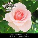 【ふるさと納税】花巻温泉バラ園オリジナル品種「オリンピアローズ2020」