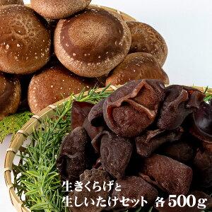 【ふるさと納税】無農薬!ぷりっぷり生きくらげと肉厚生しいたけの菌活セット 各500g