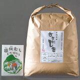 【ふるさと納税】田伝むしのササニシキ白米4kg(農薬:栽培期間中不使用)