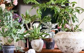【ふるさと納税】≪年4回定期便≫植物と季節を感じる1年間「インドアグリーンスタイル」 観葉植物 お申込み日の翌月から3ヶ月ごと4回お届け
