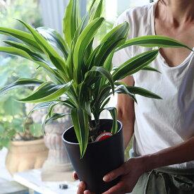 【ふるさと納税】観葉植物 「テーブルプランツ」 アソート