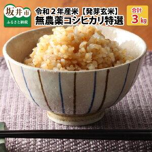 【ふるさと納税】≪発芽玄米≫無農薬 福井県産 コシヒカリ特選 真空パック 3kg