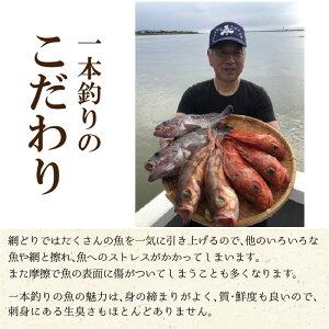 【ふるさと納税】越前三国港漁船「神力丸」船長にお任せとれピチ鮮魚グルメ箱お試し便約1.5kgまずは刺身でどうぞ!