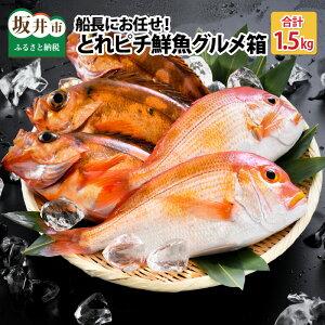 【ふるさと納税】魚さかな鮮魚サカナ刺身