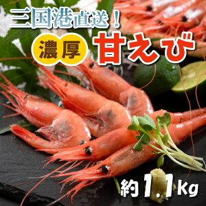 【坂井市ふるさと納税】船内冷凍された新鮮な甘海老