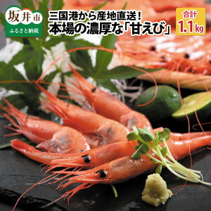 【坂井市ふるさと納税】船内冷凍された新鮮な甘エビ
