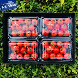 【ふるさと納税】トマト 野菜 フルーツトマト「FUJITOMA」 ボックスセット