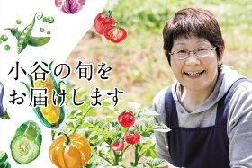 【ふるさと納税】小谷村特産品夏野菜|おたりの旬をお届けします