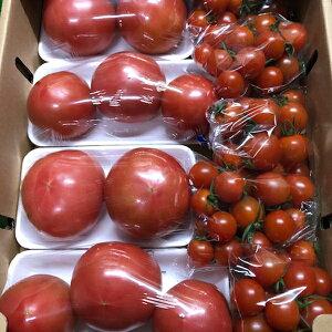 【ふるさと納税】a10-511 増田トマト農園のトマトとミニトマト 合計約3.1kg